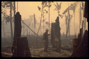 Frans Krajcberg en Amazonie, sur les lieux de la déforestation.