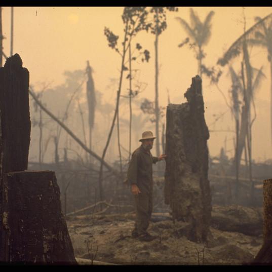 Frans Krajcberg en Amazonie sur les lieux de la déforestation