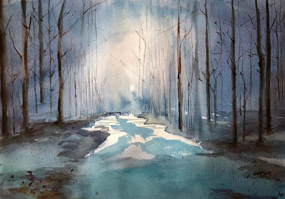 El bosque en penumbra