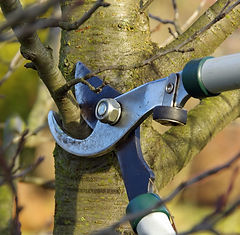 green-team-tree-pruning.jpg