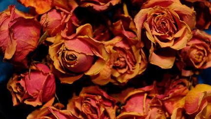BV Roses ECU 03.jpg