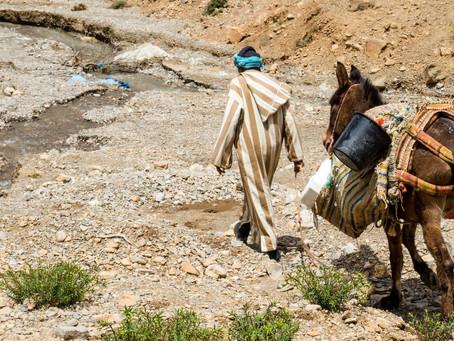 Baseline Weekly - The Faith It Takes to Saddle Up a Donkey