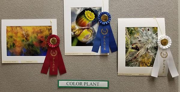 color plant winners 2021.jpg