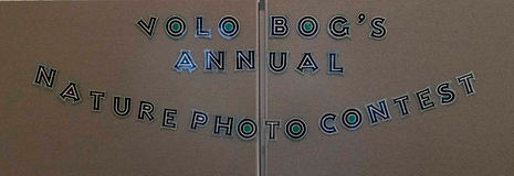 FOVB Photo contest 2021.jpg