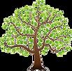 walnut tree.png