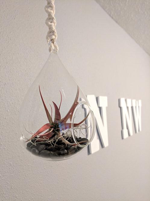 Rope Hanging Terrarium