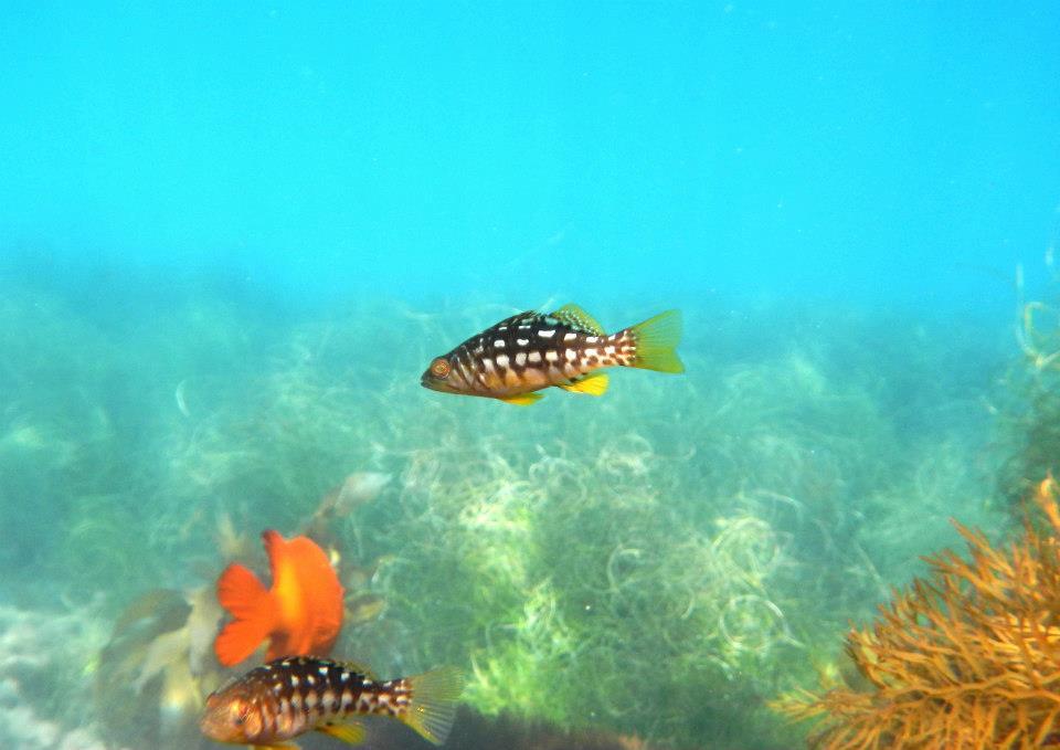 fish copy.jpg