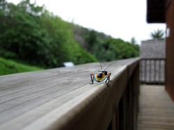 Bug Moorea.JPG