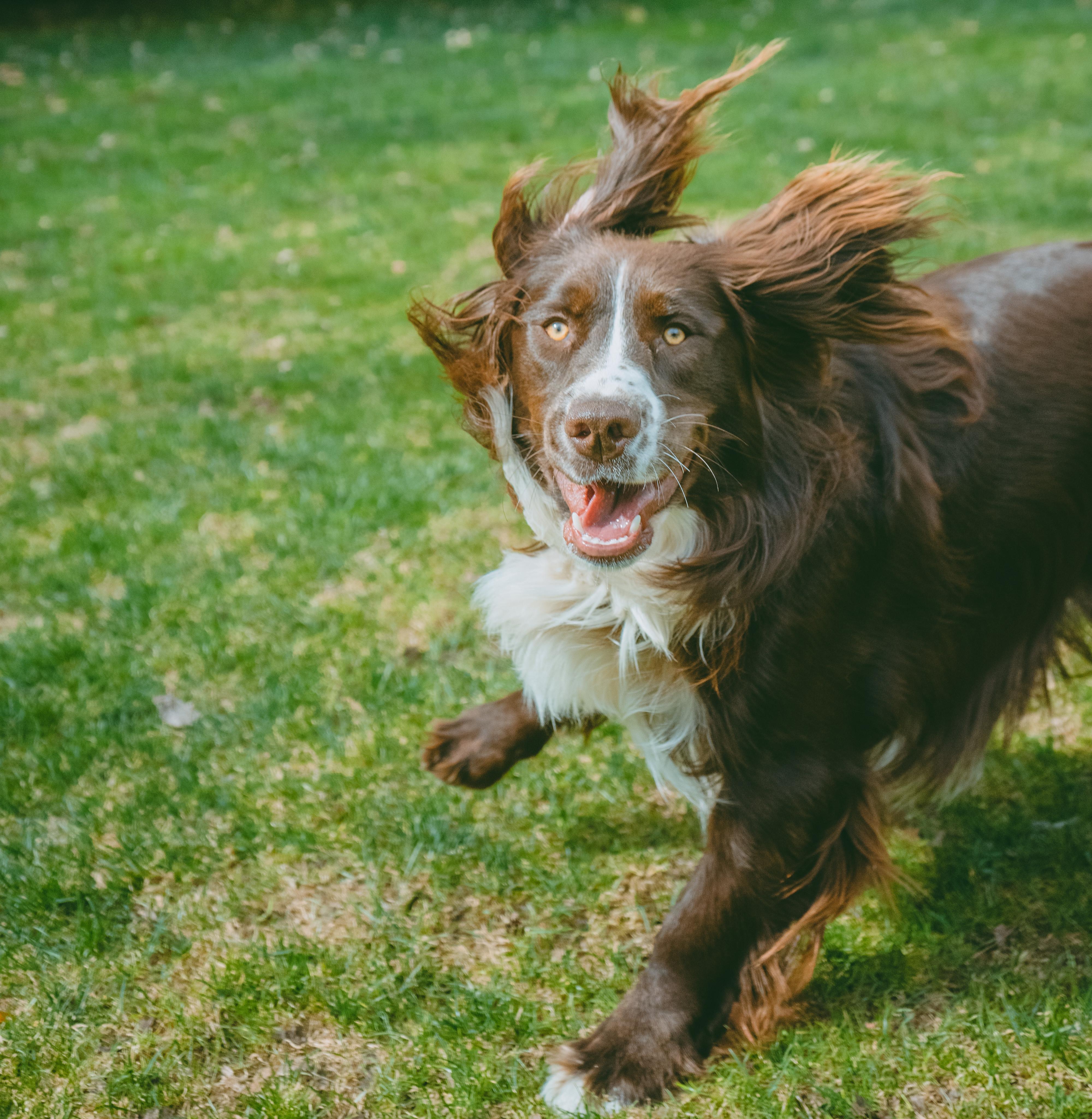 15 minute  Single Dog Shoot
