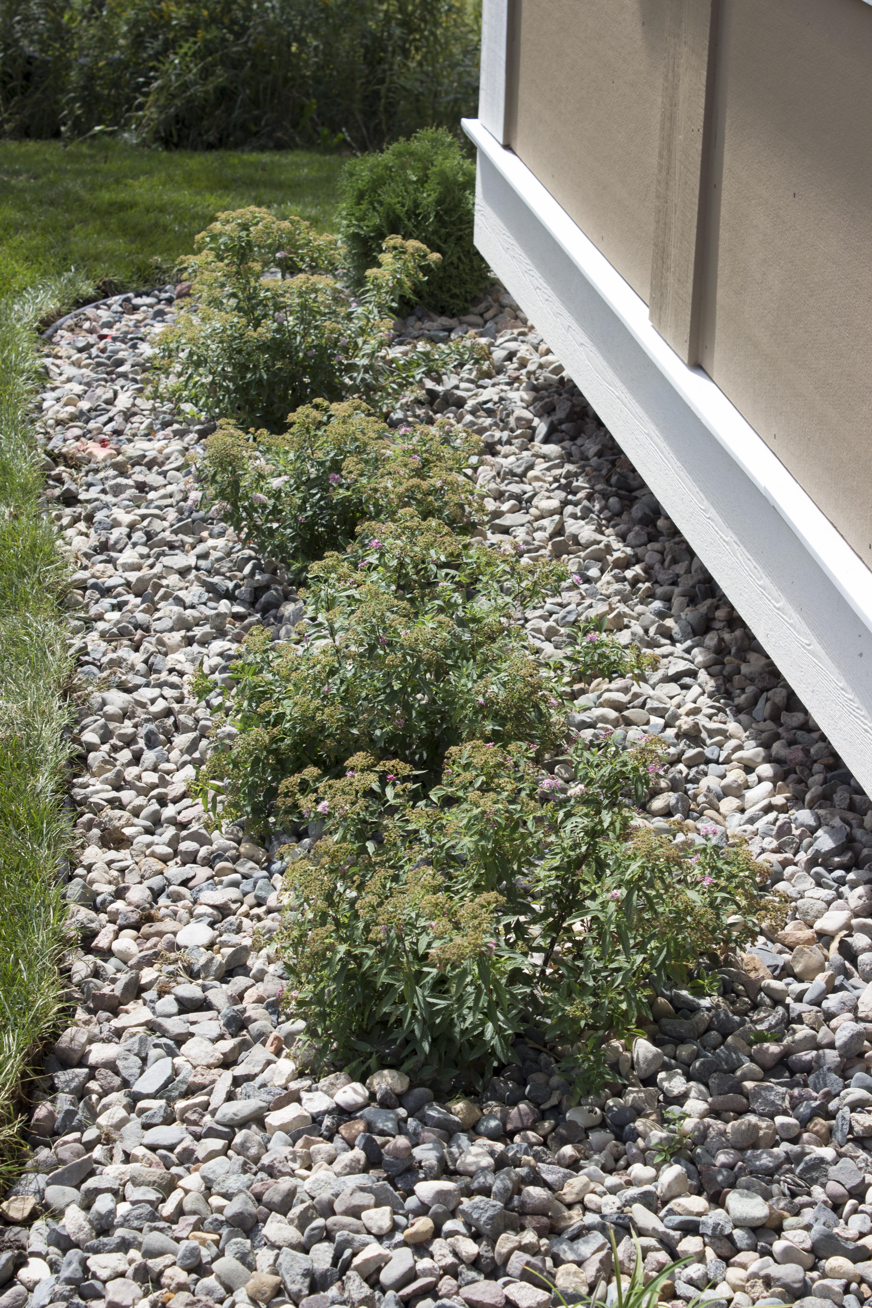 Rock, Edging,Plants