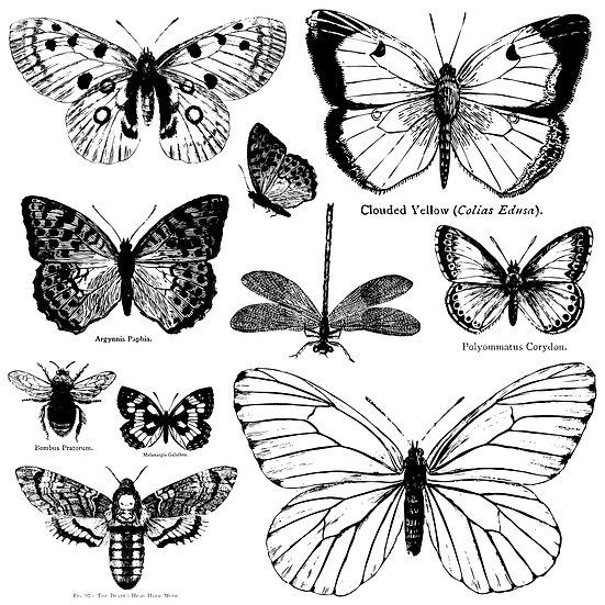 """Butterflies Stamp 12"""" x 12"""""""