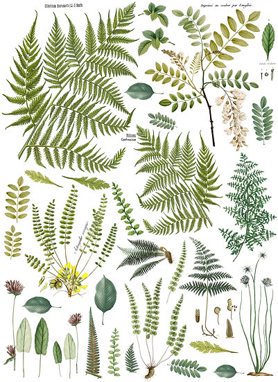"Fronds Botanical Transfer 24"" x 33"""