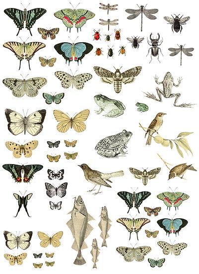 """Entomology Etcetera Transfer 24""""×33"""""""