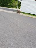 Kaia, neighbor dog followed...