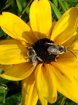 Busy bees. I love this pic.