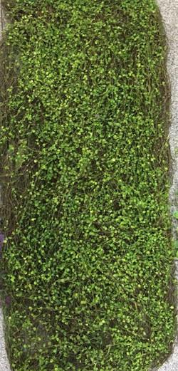VERTICAL GRASS - 020