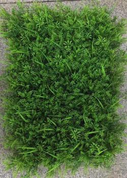VERTICAL GRASS - 013