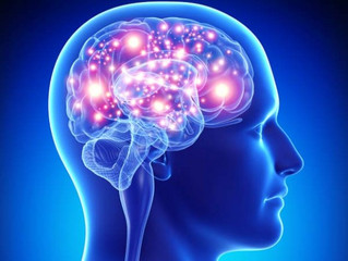 JIAIDO és neuroplaszticitás