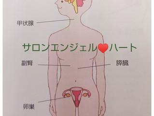 女性ホルモンとは・・・?