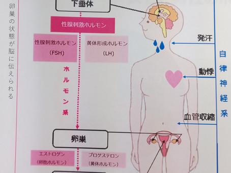 女性ホルモンと自律神経の関係