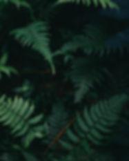 Fern Leaves