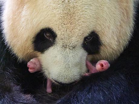 Deux nouveaux-nés au ZooParc de Beauval !