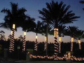 Christmas-Cedar Hammock