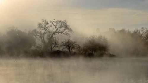 Riverbank in the mist
