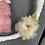 Thumbnail: Fiocco fatina