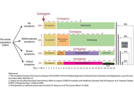 Coronavirus : les différentes phases de développement