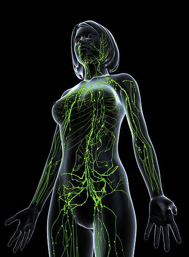 ganglions et vaisseaux lymphatiques