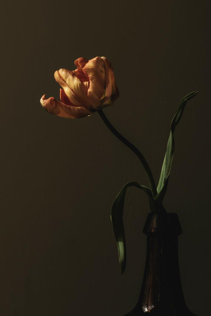 Tulp in vaas