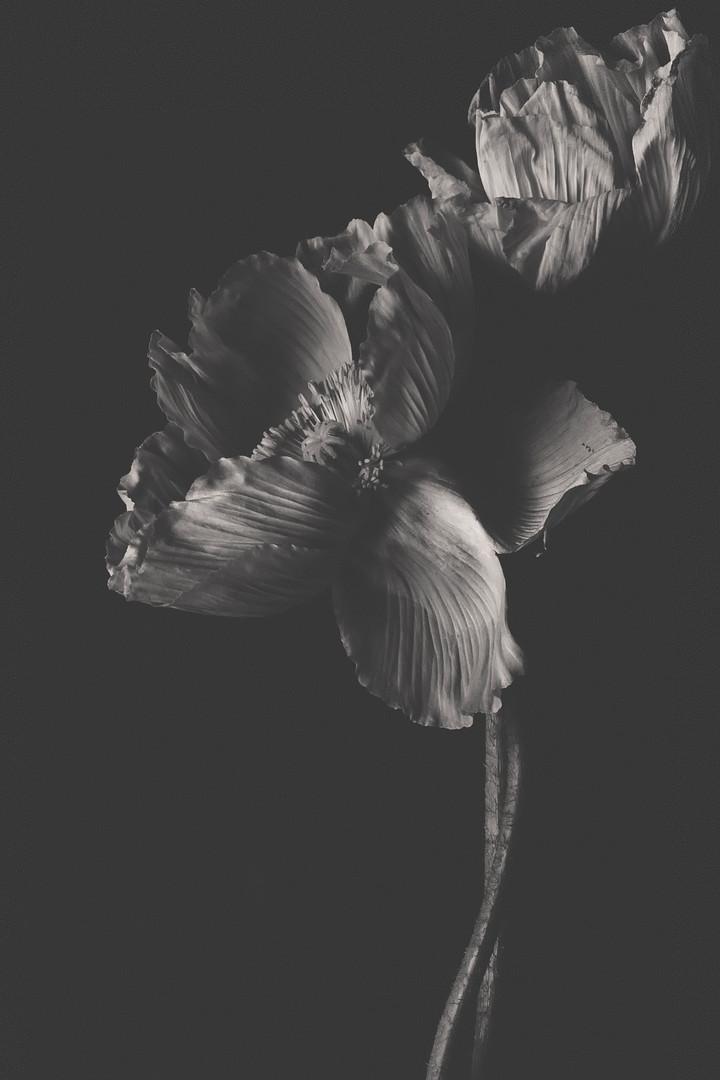 Poppy in zwart/wit
