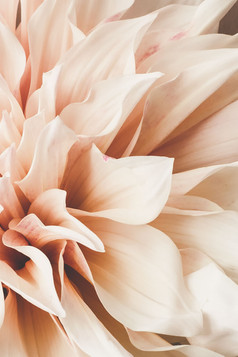 Fragment of a Dahlia by Stella Gommans
