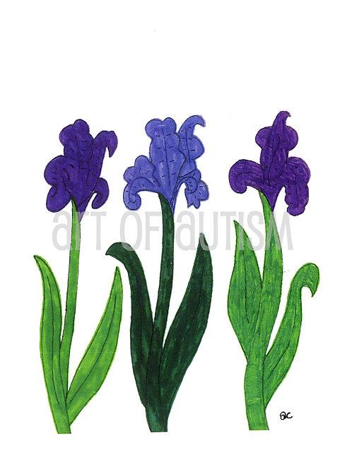 09-012 Iris