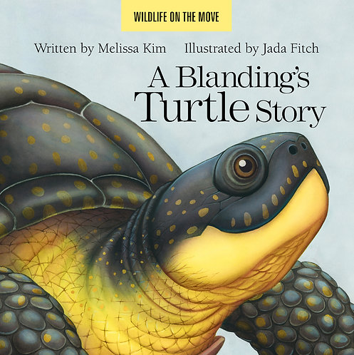 A Blanding's Turtle Story