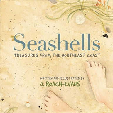 Seashells: Treasures from the Northeast Coast