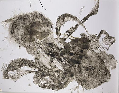 poulpe-40-1.jpg