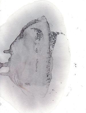 buv45.jpg