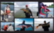 Mix of photos for header.jpg