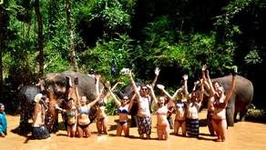 THE WANDERERS GAZETTE • ELEPHANTS, LOVE THEM DO NOT RIDE THEM