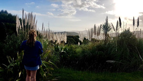 CHASING NEW ZEALAND'S GEMS • AN EPIC ROAD TRIP IN THE NORTHLAND