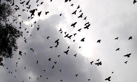 Birds_flying_at_Sky_2.JPG