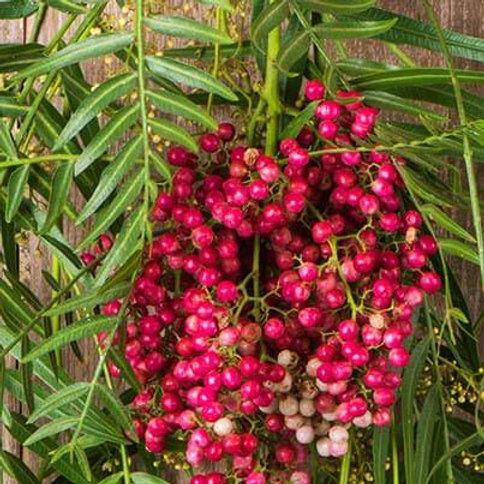 Pink Peppercorn Essential Oil