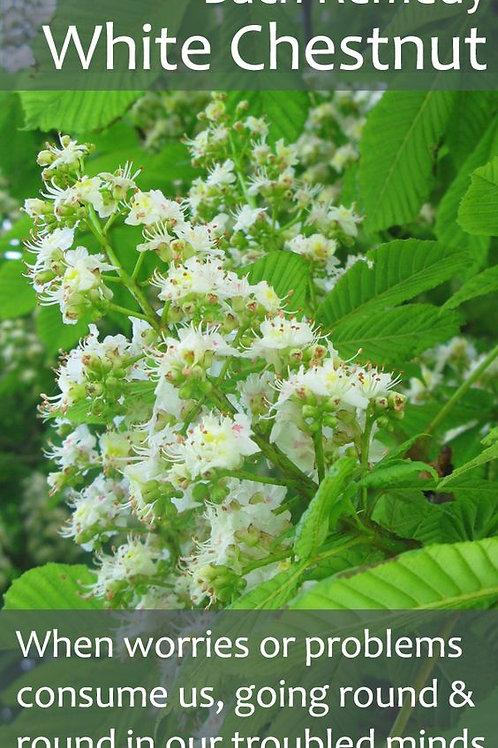 BACH FLOWER WHITE CHESNUT (Aesculus hippocastanum)