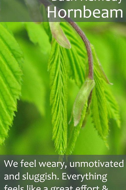 BACH FLOWER HORNBEAM (Carpinus Betulus)