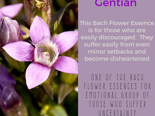 GENTIAN-BACH FLOWER REMEDY