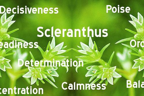 SCLERANTHUS-Bach Flower Remedy