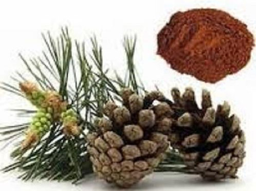 Pine Bark Extract-Powder