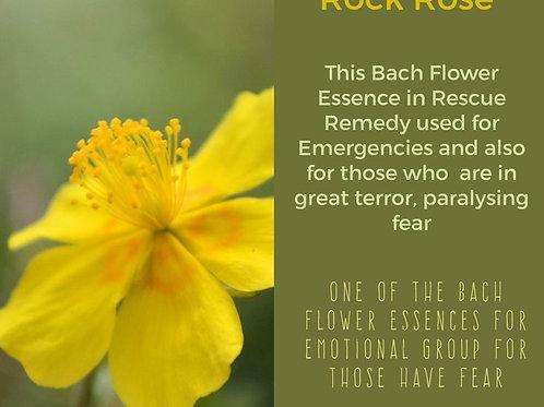 ROCK ROSE-Bach Flower Remedy